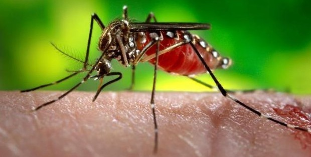Vírus da dengue, imunidade adquirida pode proteger contra o da zika