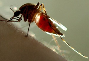 mosquito-dengue-emdefesadasaude