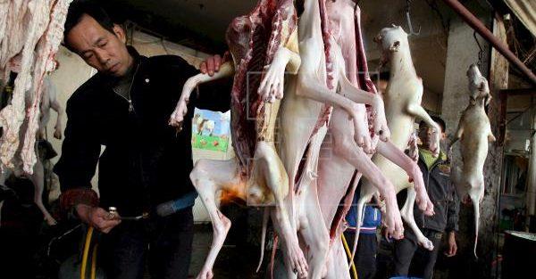 CORONAVÍRUS CHINA: consumo de carne de cães 10 milhões e gatos 4 milhões estão proibidos